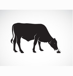 A cow is eating grass on white background farm vector