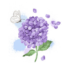 Hydrangea flower butterfly and splashes in vector