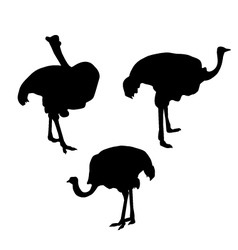 Ostrich Silhouette Set vector image