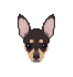 chihuahua head in pixel art style dog vector image