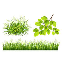 summer grass and leaves vector image