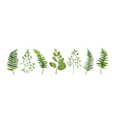 Designer elements set of green forest leaves herb vector