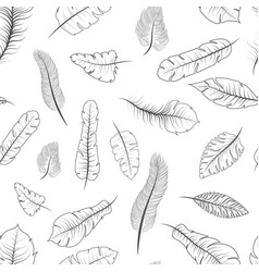 different black and white exotic feathers vector image