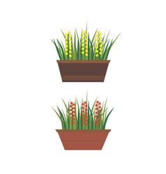 Flowers in pots vector