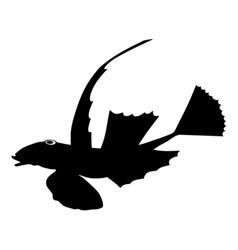 Silhouette of lesser dragonet vector image