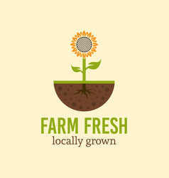 Sunflower sprout from the soil logo concept vector