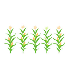 corn stalk vector image