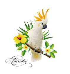parrot cockatoo on the tropical branches vector image