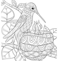 Adult coloring bookpage a cute hummingbird near vector