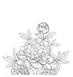 peonies ink background vector image