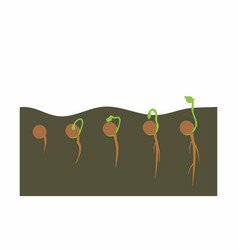 growing plant in process vector image