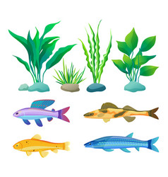 Aquarium fish and decorative algae color poster vector