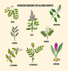 Best ayurvedic herbs for allergic rhinitis vector
