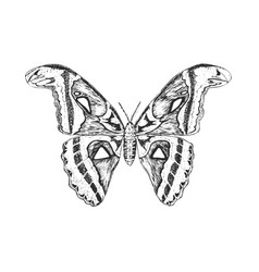 butterfly or wild insects atlas moth mystical vector image