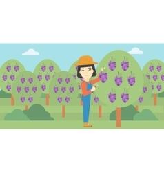 Farmer collecting grapes vector