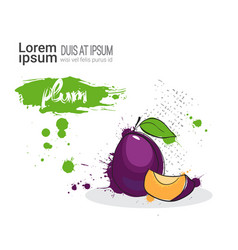 Plum hand drawn watercolor fruit on white vector