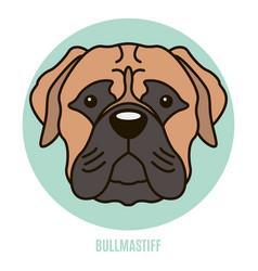 Portrait of bullmastiff vector