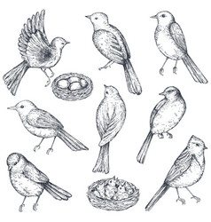 set of hand drawn ink sketch birds nest chicks vector image