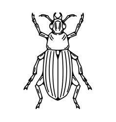 beetle isolated on white background vector image vector image