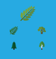 Flat icon nature set of timber acacia leaf tree vector