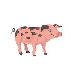 funny little pig with black spots vector image