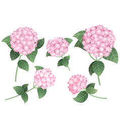 Set pink hydrangea flowers with green stems vector