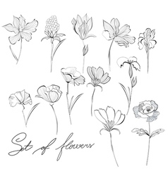 flower sketch vector images over 45 000
