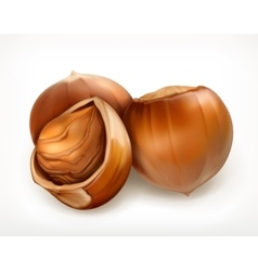 Hazelnuts in shell icon vector