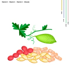 Balsam Pear with Vitamin K C A and Minerals vector image