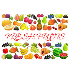 exotic tropical and garden berries and fruits vector image