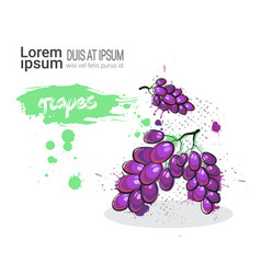grape hand drawn watercolor fruit on white vector image