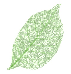 green vein leaf vector image vector image