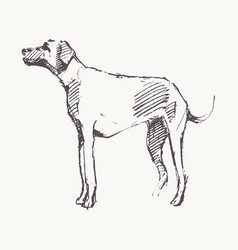 hand drawn a dog realistic sketch vector image