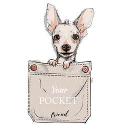 little dog in pocket vector image