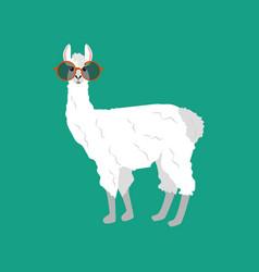 Llama in round glasses vector