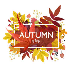 Autumn season floral card with leaf frame vector