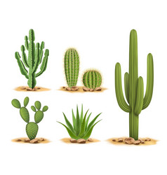 Cactus plants set of desert among sand and rocks vector