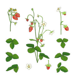 hand drawn strawberry set isolated on white vector image