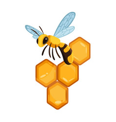 honeycomb with honey drops sweet honey with bees vector image