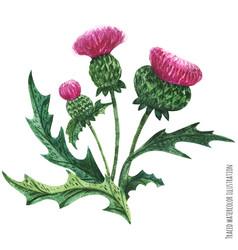 Scottish wild plants boutonniere thistle bouquet vector