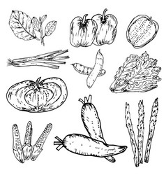 set hand drawn vegetables organic herbs vector image