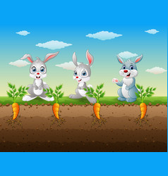 Three rabbits cartoon in the carrot garden vector
