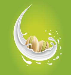 Milk splash with pistachio nuts vector