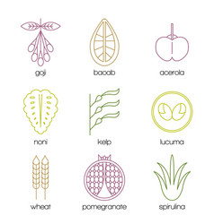 superfood color line icons set vector image