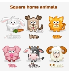 cute cartoon square Home animals vector image