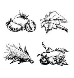 hand drawn vintage set of vegetables vector image vector image