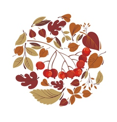 Autumn leaves with rowanberry vector image