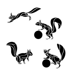 set squirrel in different pose vector image