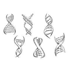 DNA models with double helices sketches vector image