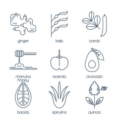 superfood line icons set vector image